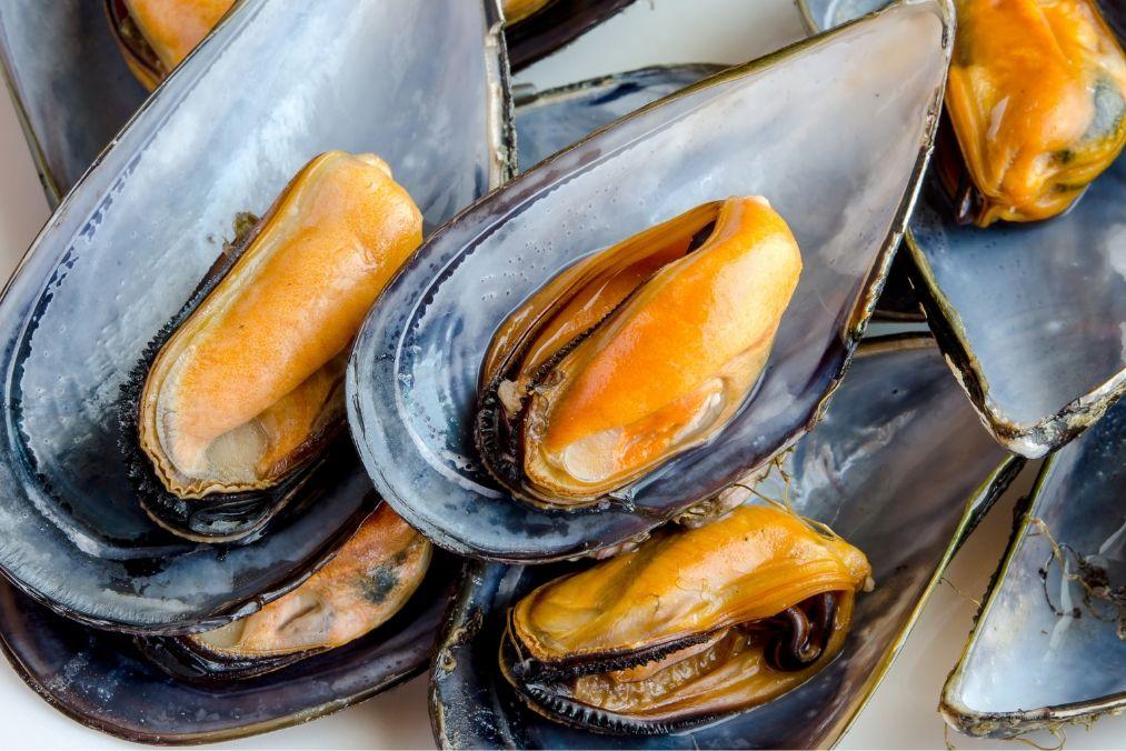 zeeuwse-mosselen-antwerpen
